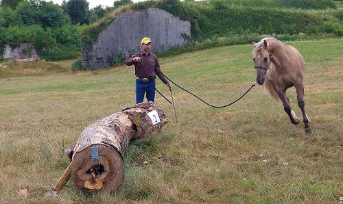 Addestramento-cavallo-aperto-1