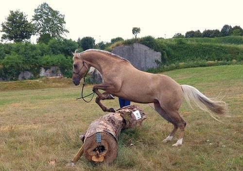 Addestramento-cavallo-aperto-2