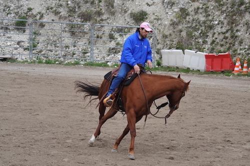 Addestramento-equitazione