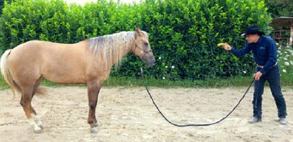 Articolo-comunicare-al cavallo-energia-1