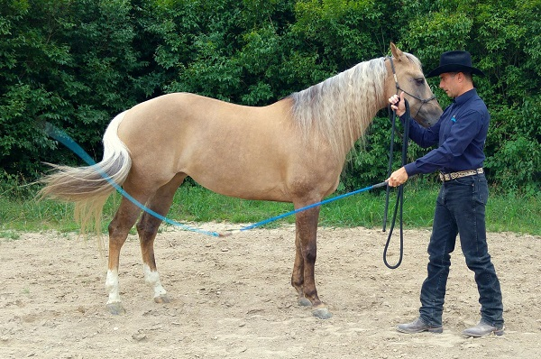 Articolo-comunicare-al-cavallo-energia-2