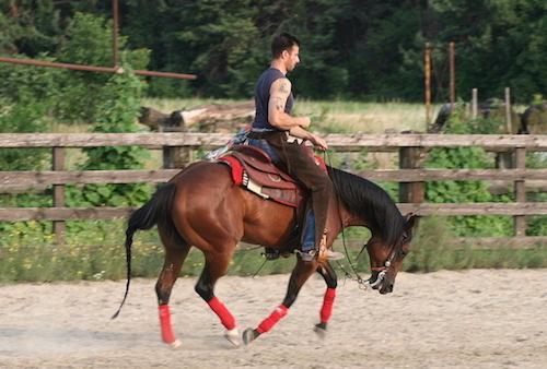 Cavalli-gara-Reining