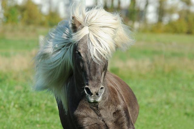 carattere-cavallo