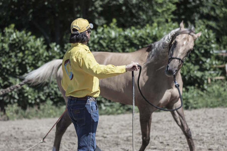 cavallo-alla-corda-gabrielecavalli-3