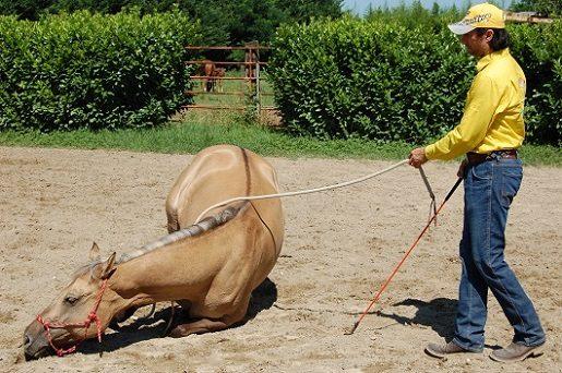 Come Far Sdraiare Un Cavallo.Lay Down Gabrielecavalli