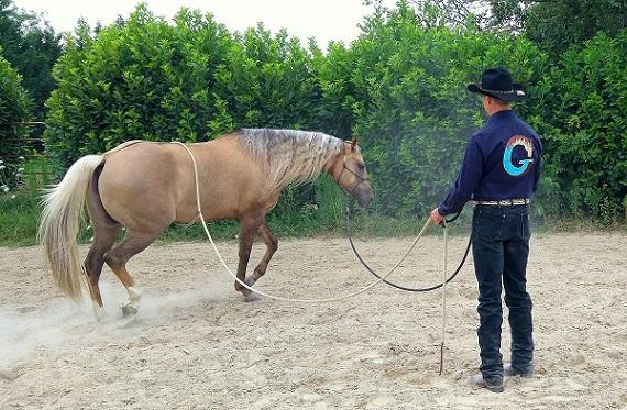 articolo-desensibilizzazione-cavallo-2