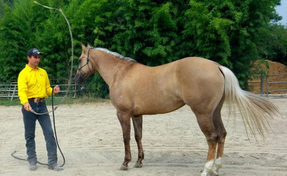 articolo-desensibilizzazione-cavallo-3
