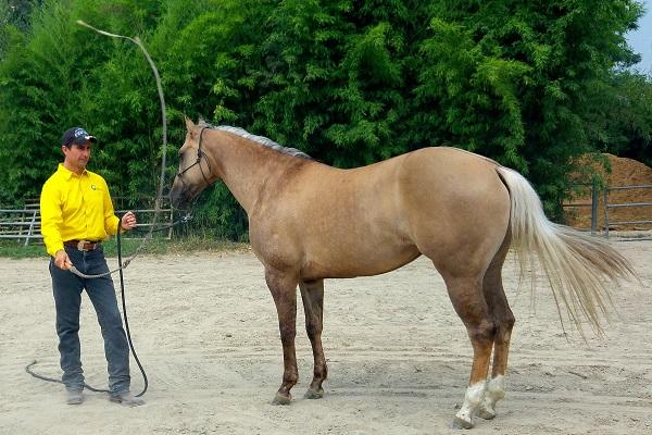 Desensibilizzazione del cavallo gabrielecavalli - Avere un cavallo ...