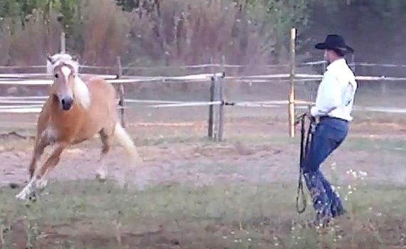 video-prendere-il-cavallo-al-paddock