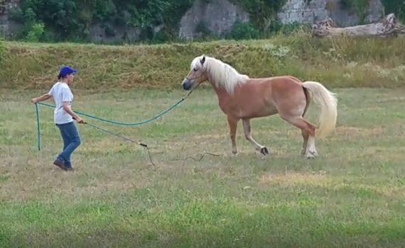 Video-Addestramento del cavallo all'aperto