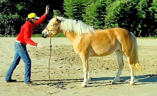 Gestione del cavallo in scuderia gabrielecavalli - Avere un cavallo ...