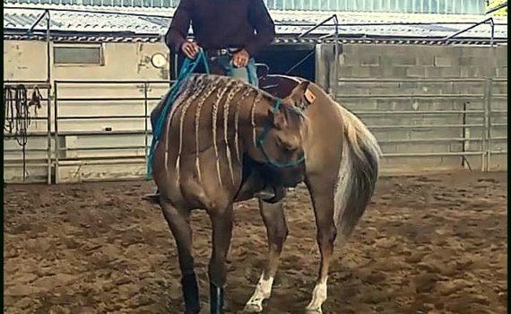 Articolo-Video-Fermare il cavallo con una redine sola