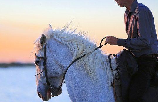 Articolo-Formazione cavalieri da passeggiata