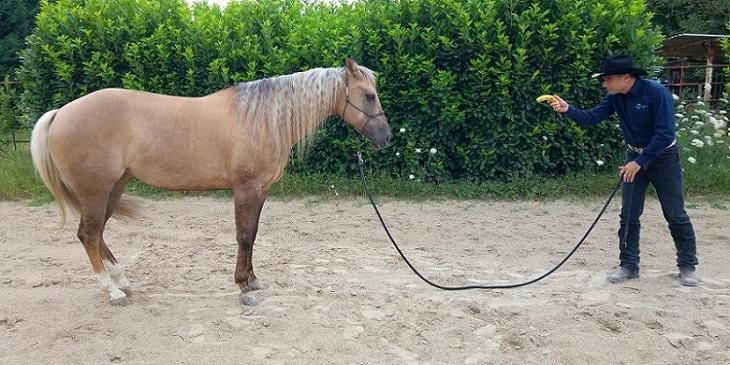 Articolo-comunicare-al-cavallo-energia-3