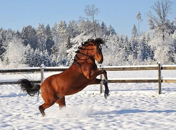 Foto-articolo-Perchè i cavalli non hanno tutte le giornate uguali-2