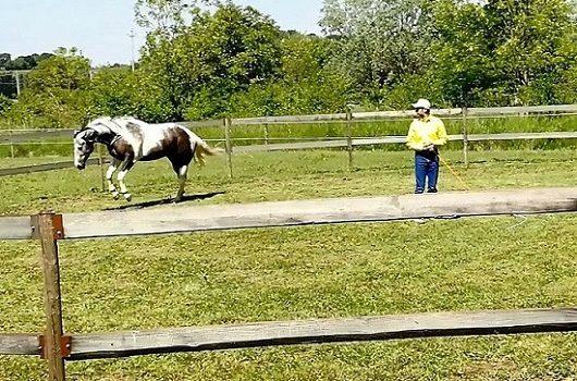 Foto-Videoarticolo-Lavoro del cavallo in tondino