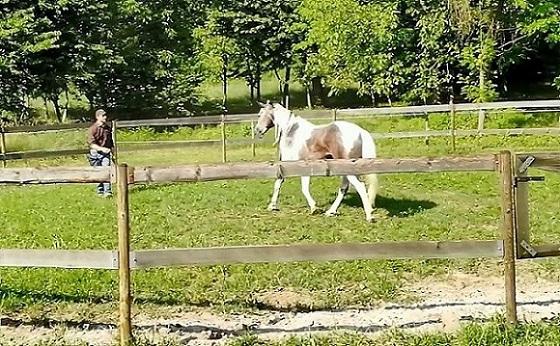 Foto-Videoarticolo-Lavoro in tondino-Attirare il cavallo verso di noi