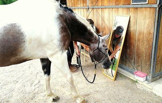 Foto-videoarticolo-relazione uomo/cavallo