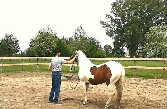 Foto-Articolo-Cavalli che non vogliono farsi toccare le orecchie