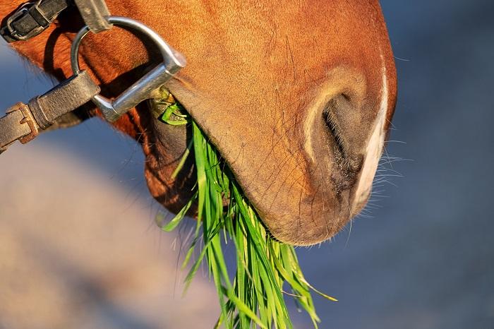 Foto-articolo-cavalli che mangiano in passeggiata-1