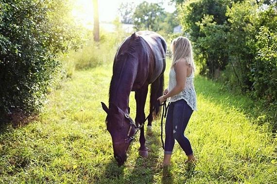 Foto-articolo-cavalli che mangiano in passeggiata-2