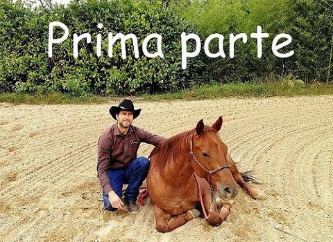 Foto-Videoarticolo-Come insegnare al cavallo ad accovacciarsi a terra