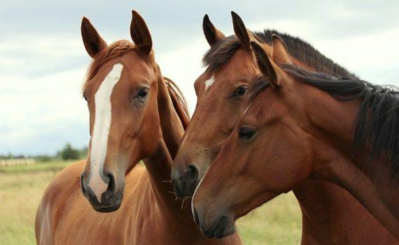 Foto-articolo-Non è mai colpa del cavallo