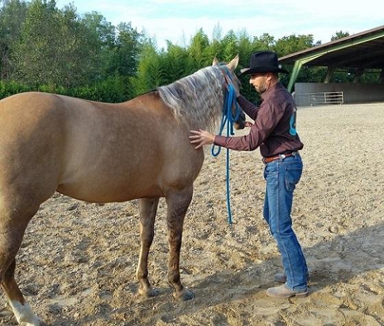 Foto-Articolo-Hai un cavallo leggero o pesante-1