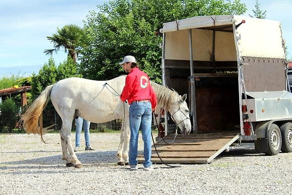 Foto-articolo-caricare il cavallo sul trailer-1