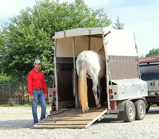 Foto-articolo-caricare il cavallo sul trailer-2