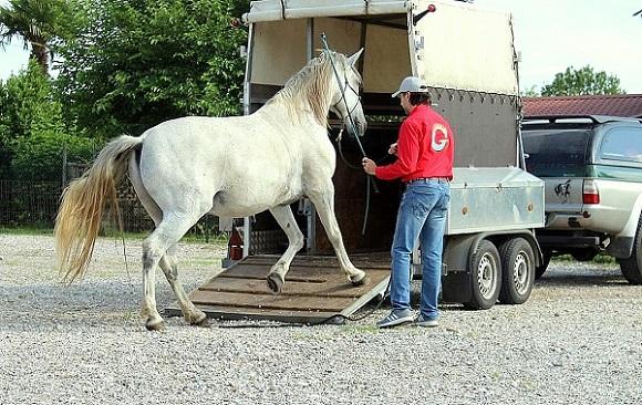 Foto-articolo-caricare il cavallo sul trailer