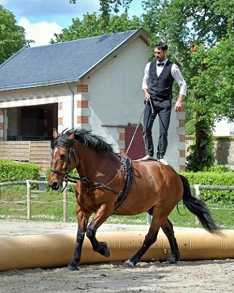 Foto-Articolo-I cavalli insegnano alle persone -