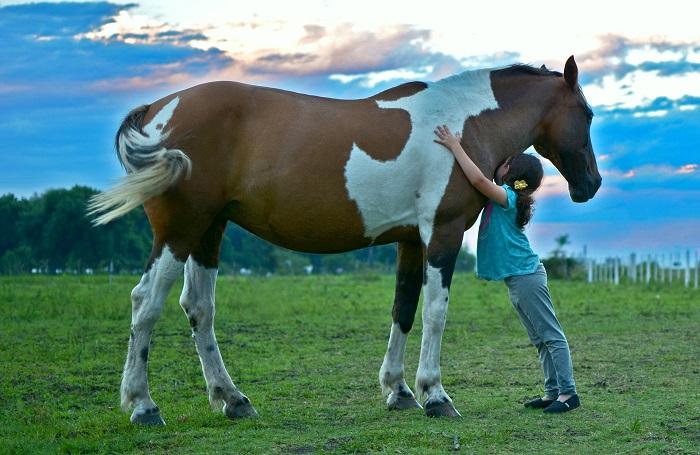 Foto-Articolo-I cavalli insegnano alle persone