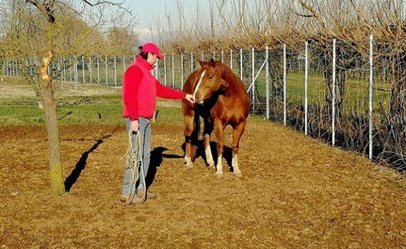 Foto articolo - Come prendere un cavallo che non conosci 2