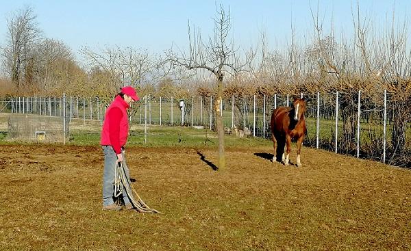 Foto articolo - Come prendere un cavallo che non conosci