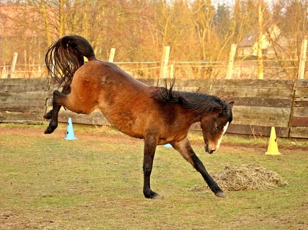 Foto-Articolo-Cosa fare se il cavallo sgroppa