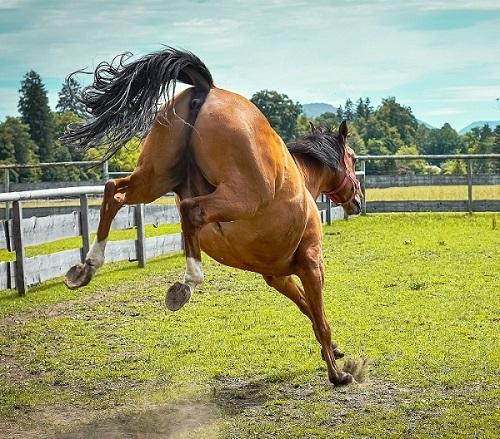 Foto1-Articolo-Cosa fare se il cavallo sgroppa