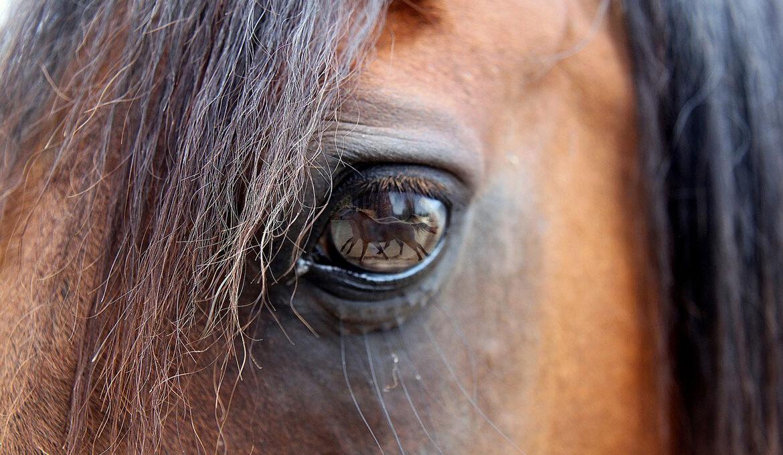 Gabriele Cavalli Attività