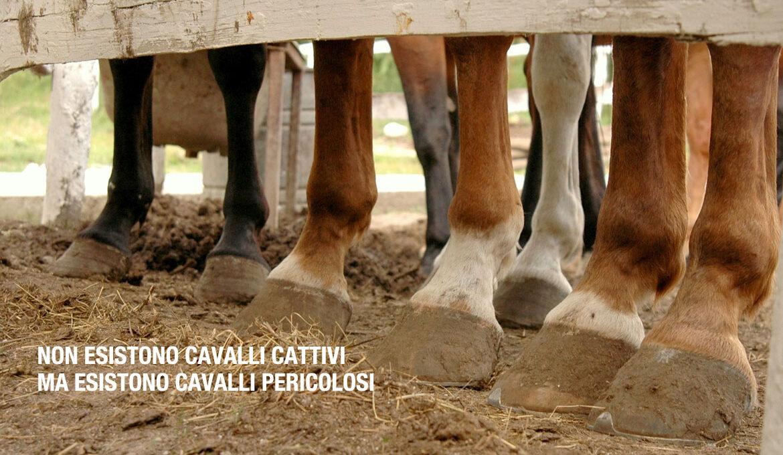 Gabriele Cavalli - trainer e Tecnico federale di 2° livello di equitazione americana