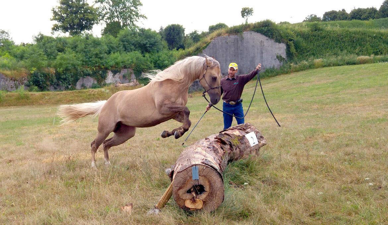 Metodo Gabriele Cavalli - trainer e Tecnico federale di 2° livello di equitazione americana
