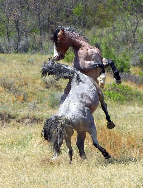 Foto-Articolo-Cosa fare se il cavallo si impenna-1