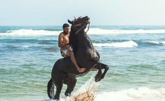 Foto-Articolo-Cosa fare se il cavallo si impenna-2