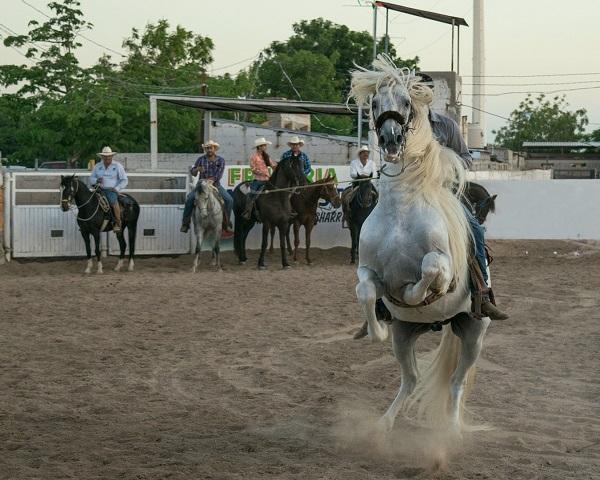 Foto-Articolo-Cosa fare se il cavallo si impenna