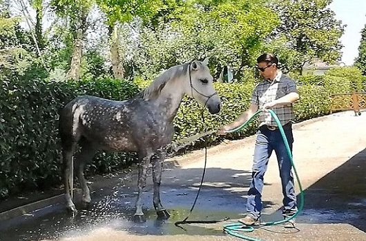 Foto-Videoarticolo-Come abituare il cavallo all'acqua