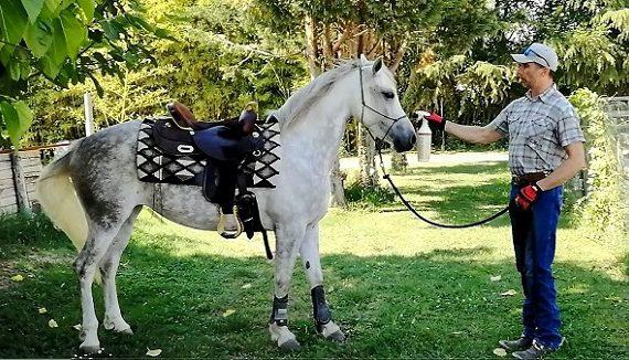 Foto-Videoarticolo-Abituare il cavallo allo spruzzino